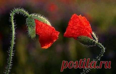 """Время не меняет человека, мудрость не меняет человека, и единственное, что может перестроить строй его мыслей и чувств, - это любовь.    Пауло Коэльо """"Одиннадцать минут"""""""