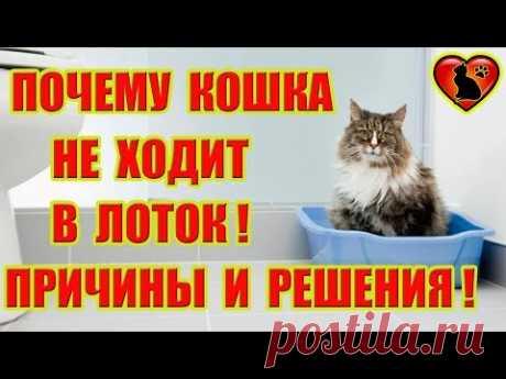 Почему Кошка Не Ходит в Лоток? Причины и Пути Решения!