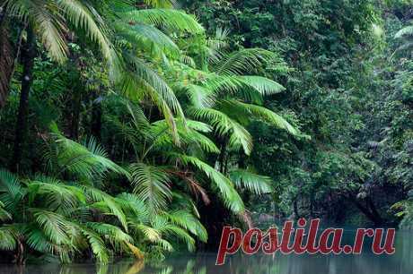 Национальный парк Дейнтри Daintree (Австралия)