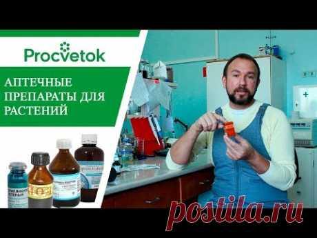 Использование лекарств в садоводстве. Применение йода, зеленки, марганцовки, аспирина, аммиака. - YouTube