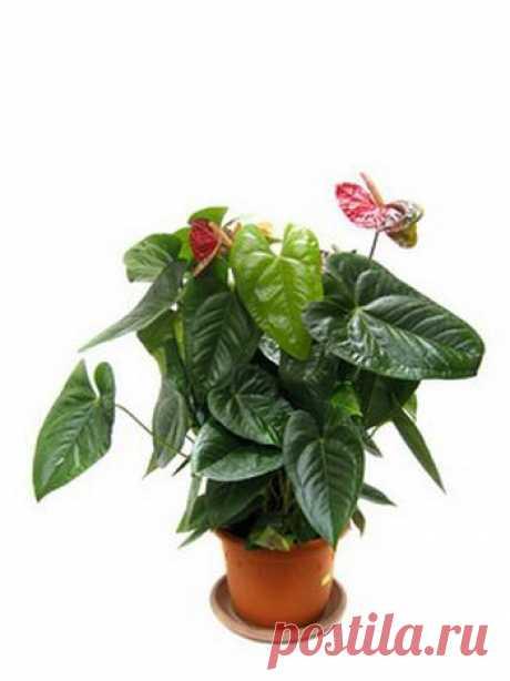 10 комнатных растений для семейного счастья.