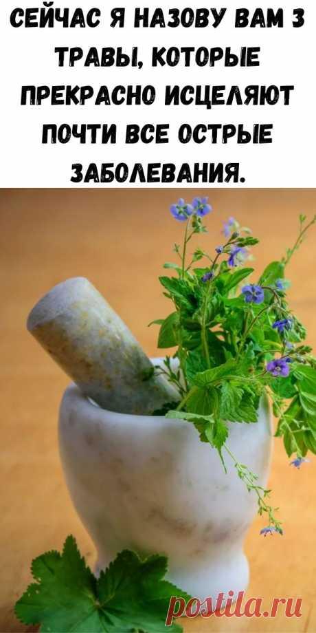 Сейчас я назову вам 3 травы, которые прекрасно исцеляют почти все острые заболевания. - Советы для тебя