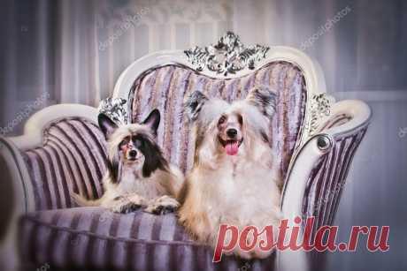 картинки две собаки на белом кожаном кресле перекидной календарь: 8 тыс изображений найдено в Яндекс.Картинках