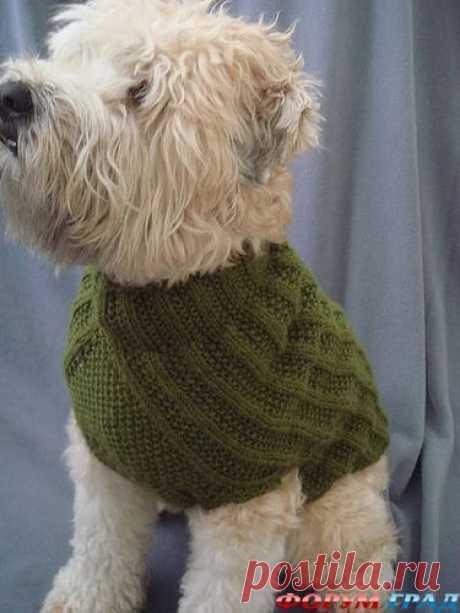 Вязанная одежда для собак. - Вязаные вещи собаке и кошке – они хотят тоже пофорсить немножко - Форум-Град