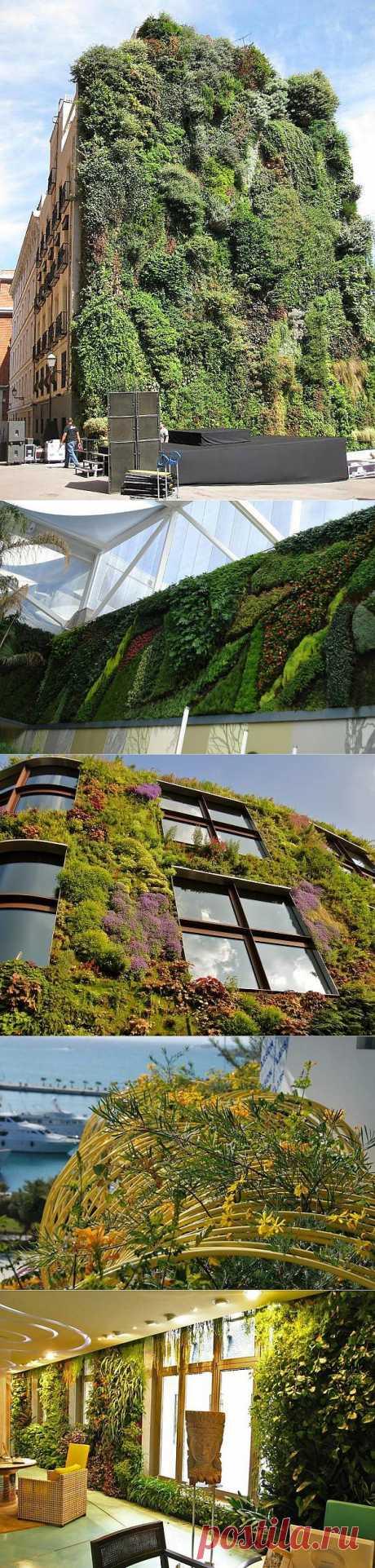 Вертикальные сады как городское искусство | ПолонСил.ру - социальная сеть здоровья