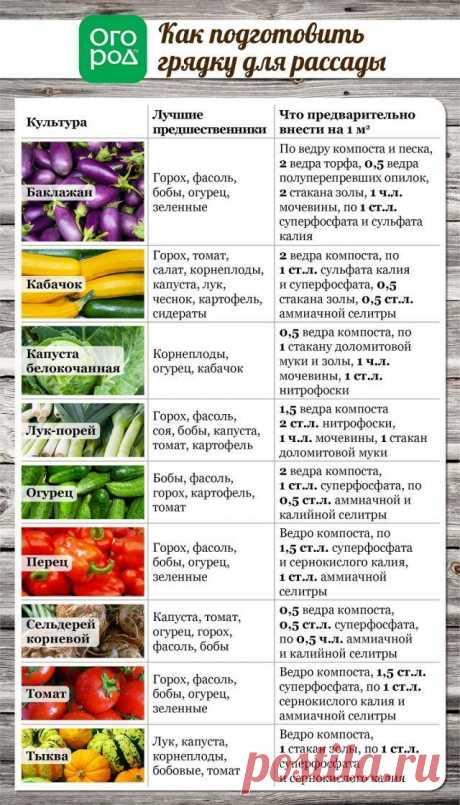 Todo que queríais saber el desembarco de las plantas en el terreno (en las tablas) | las Plantas (Огород.ru)
