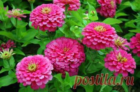 Какие цветы надо сажать на рассаду в апреле? — Дом и Сад