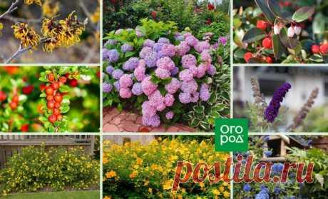 20 необычных кустарников для вашего сада. Часть 1 | Дизайн участка (Огород.ru)