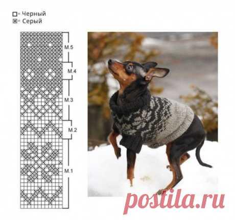 Свитер для маленькой собачки из категории Интересные идеи – Вязаные идеи, идеи для вязания