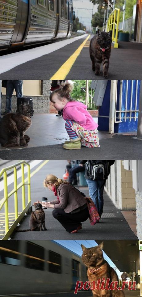 В Германии кот может самостоятельно ездить в поезде и встречает свою хозяйку с работы.