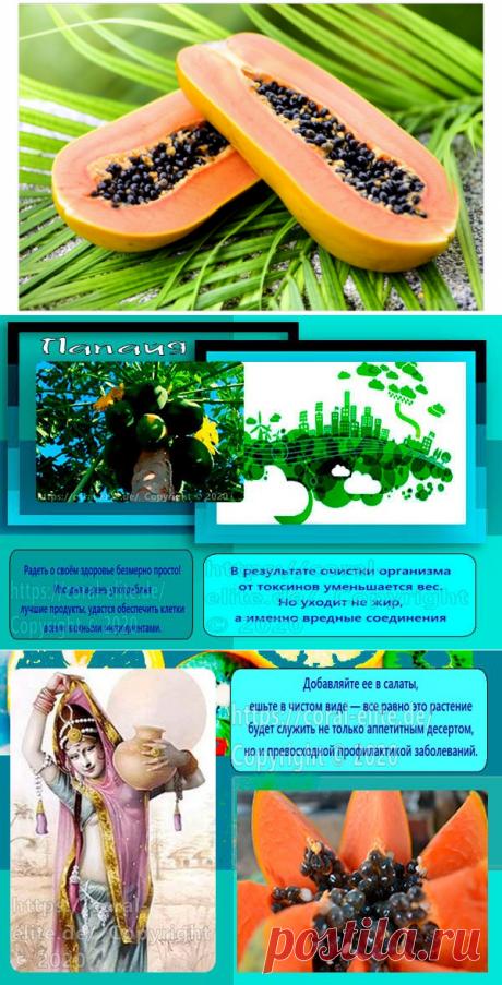 Польза папайи для организма - Полезные рецепты