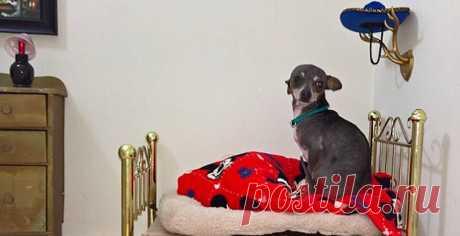 Пончо, пожалуй, первая в мире собака, у которой есть комната с роялем.