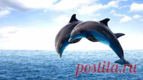 Очевидцы сняли видео, как огромная стая дельфинов «бежит» по волнам