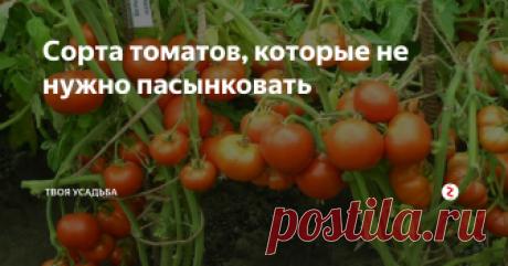 Сорта томатов, которые не нужно пасынковать Пасынкование томатов один из важнейших этапов в их выращивании. Если вовремя не удалять пасынки, то растение будет загущено, что сказывается на его урожайности, а также склонности к поражению болезням. Существует огромное разнообразие сортов томатов, которые не требуют пасынкования и тем самым снижают трудозатраты во время их выращивания. В основном это низкорослые томаты для открытого грунта, но