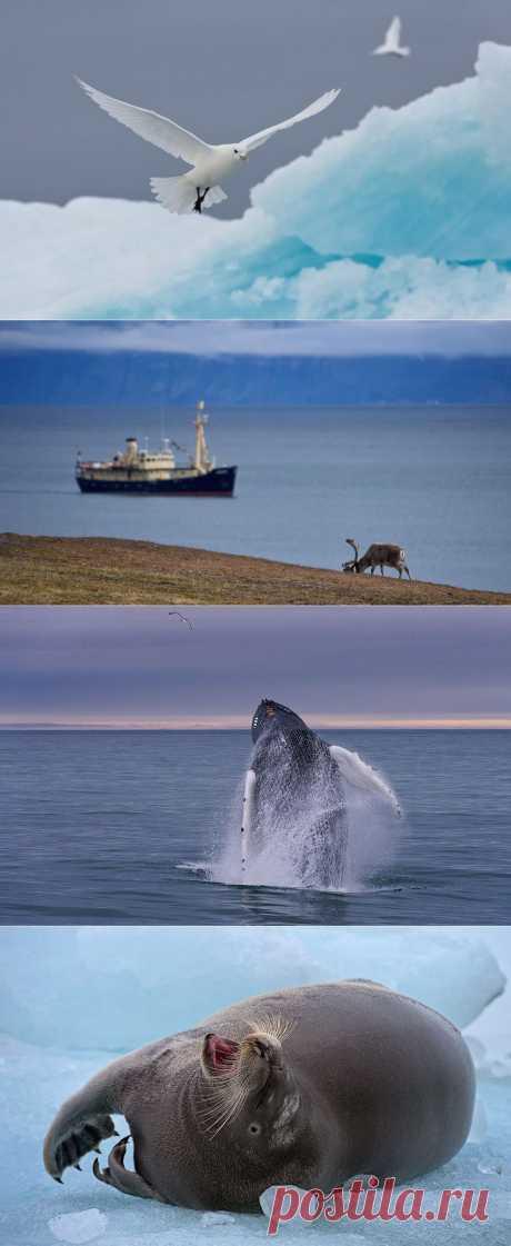 Холодная красота Арктики
