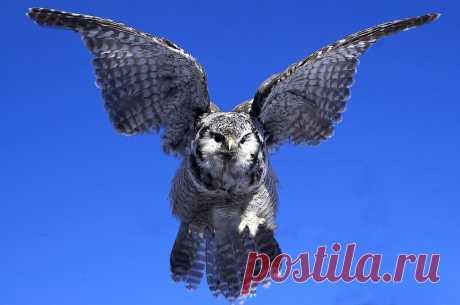15 ослепительных фотографий птиц России | WWF России | Яндекс Дзен