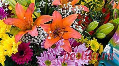 Какие цветы выбрать к празднику   Гороскоп