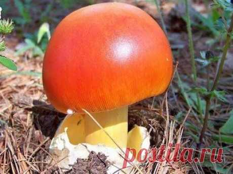 Эти царские грибы-целители от боли в суставах до сих пор в 100 раз лучше химииᅠᅠᅠᅠᅠᅠᅠᅠᅠᅠᅠᅠᅠᅠᅠᅠᅠᅠᅠᅠᅠᅠᅠᅠᅠᅠᅠᅠᅠᅠᅠᅠᅠᅠᅠᅠᅠᅠᅠᅠᅠᅠᅠᅠᅠᅠ ᅠᅠᅠᅠᅠᅠᅠᅠᅠᅠᅠᅠᅠᅠᅠᅠᅠᅠᅠᅠᅠᅠᅠᅠᅠᅠᅠᅠᅠᅠᅠᅠᅠᅠᅠᅠᅠᅠᅠᅠᅠᅠᅠ  ᅠᅠᅠᅠᅠᅠᅠᅠᅠᅠᅠᅠᅠᅠᅠᅠᅠᅠᅠᅠᅠᅠᅠᅠᅠᅠᅠᅠᅠᅠᅠᅠᅠᅠᅠᅠᅠᅠᅠᅠᅠᅠᅠᅠᅠᅠᅠ ᅠᅠᅠᅠᅠᅠᅠᅠᅠᅠᅠᅠᅠᅠᅠᅠᅠᅠᅠᅠᅠᅠᅠᅠᅠᅠᅠᅠᅠᅠᅠᅠᅠᅠᅠᅠᅠᅠᅠᅠᅠᅠᅠ ᅠᅠᅠᅠᅠᅠᅠᅠᅠᅠᅠᅠᅠᅠᅠᅠᅠᅠᅠᅠᅠᅠᅠᅠᅠᅠᅠᅠᅠᅠᅠᅠᅠᅠᅠᅠᅠᅠᅠᅠᅠᅠᅠᅠᅠᅠᅠ ᅠᅠᅠᅠᅠᅠᅠᅠᅠᅠᅠᅠᅠᅠᅠᅠᅠᅠᅠᅠᅠᅠᅠᅠᅠᅠᅠᅠᅠᅠᅠᅠᅠᅠᅠᅠᅠᅠᅠᅠᅠᅠᅠ  ᅠᅠᅠᅠᅠᅠᅠᅠᅠᅠ | украшения из кожи |