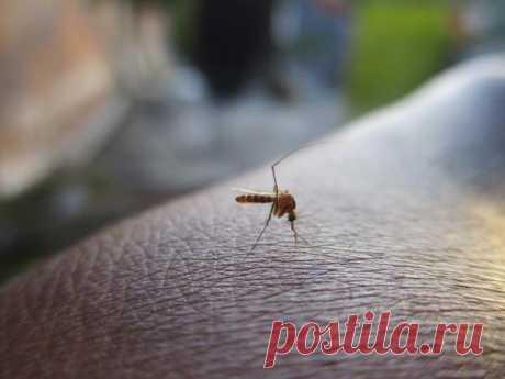 Натуральный отпугиватель комаров: средство можно приготовить всего из двух ингредиентов  ё