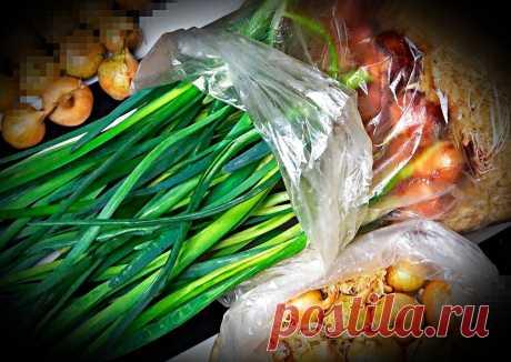Урожай зеленого Лука на окне зимой. Делюсь простым способом посадки лука на Перо. | Сад и огород | Яндекс Дзен