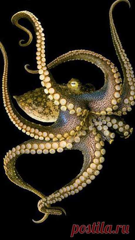 Octopus   Under The Sea