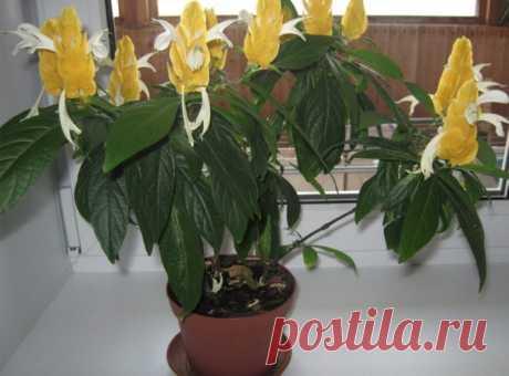 Комнатные растения с желтыми цветками: названия и особенности. Домашние цветы с желтыми цветками — топ коллекция