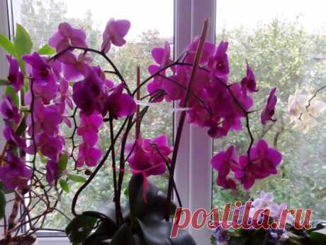 Прекрасные орхидеи. Секреты ухода