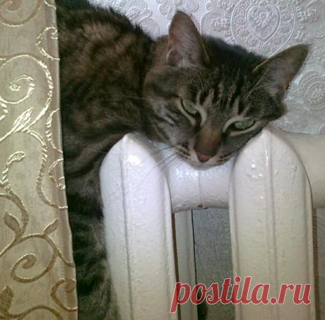 Можно ли приучить к лотку старого слепого кота? (Непридуманная история) | О кошках и не только | Яндекс Дзен