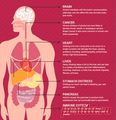 Что делать при алкогольном отравлении Злоупотребление алкогольными напитками приводит к серьезным проблемам со здоровьем. Чтобы предотвратить неприятные последствия важно научиться распознавать симптомы алкогольного отравления.