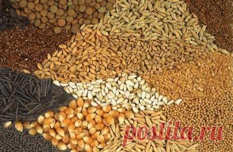 Семянотерапия — лечение семенами.  Семянотерапия— весьма перспективное научное и лечебное направление в медицине, особым образом использующее целебные свойства семян и зерен. Оказывается, семя под воздействием тепла и влаги человеческ…