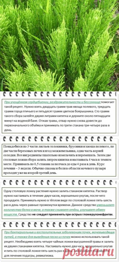 Хвощ полевой: полезные, лечебные свойства и противопоказания