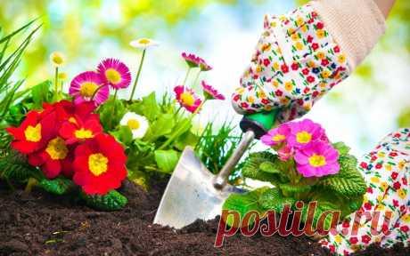 Календарь посадки многолетних корневищных цветов | Прочие многолетники (Огород.ru)