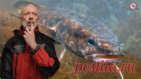 Самая неуловимая речная рыба. Мнение рыбаков