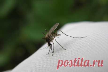 Что сделать, чтобы комариные укусы не чесались   CityWomanCafe.com