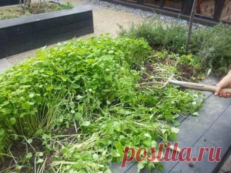 Осенние удобрения для сада и огорода: когда вносить и чем лучше подкормить почву