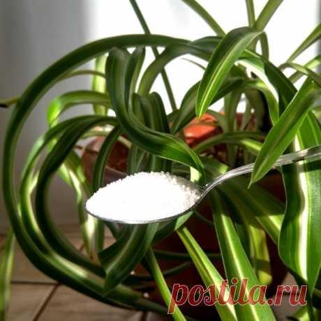 7 приемов, чтобы комнатные растения росли как на дрожжах — Сияние Жизни