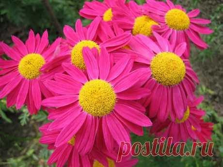 20 цветочных многолетников крупным планом / многолетние цветы / 7dach.ru