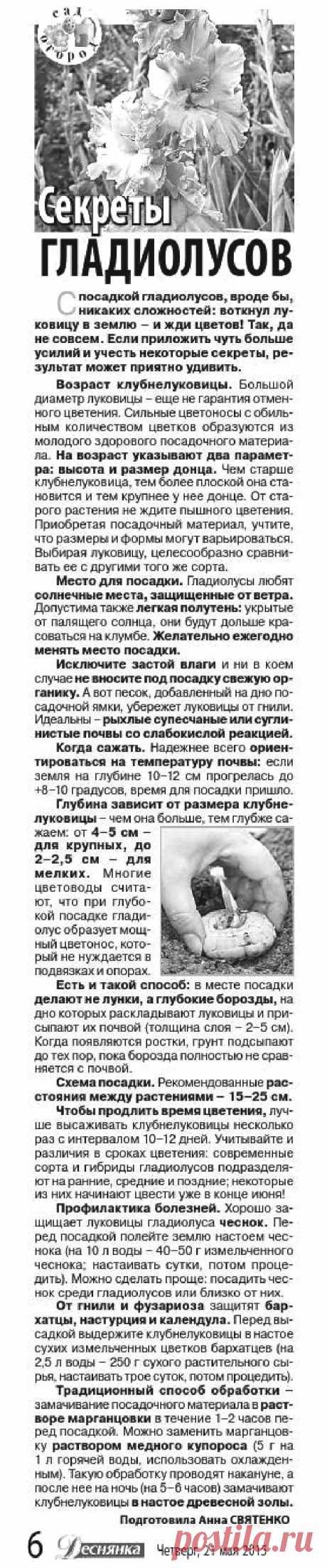 Секреты гладиолусов