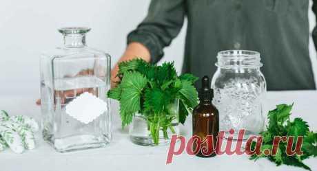 Бальзам из майской крапивы для укрепления иммунитета и омоложения организма: старый рецепт