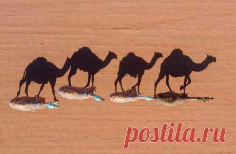 ФОТО ДНЯ. Ежегодный Фестиваль верблюдов под патронатом короля Абдул-Азиза. Эр-Рияд, Саудовская Аравия. Для этого мероприятия специально выстроена целая деревня, находящаяся примерно в 200 км от Эр-Рияда. В рамках фестиваля проводятся традиционные верблюжьи скачки и другие состязания. Призовой фонд составляет более $50 млн.