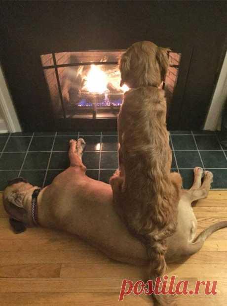 Что не так с твоим псом?! Или 25 собак, которые ведут себя странно даже для других собак
