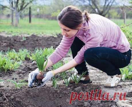 Cuando no es posible sentar y sembrar