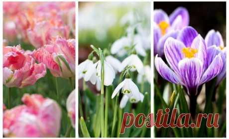 Весенние луковичные – фото, названия, советы по посадке и выращиванию | В цветнике (Огород.ru)