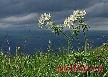 Полевые цветы на зелёном лугу... Безучастно на них я глядеть не могу. Умилителен вид этой нежной красы В блеске знойного дня иль сквозь слёзы росы; Без причуд, без нужды, чтоб чья-либо рука Охраняла её, как красу цветника;