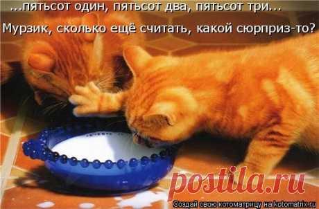 50 самых лучших котоматриц недели / Питомцы