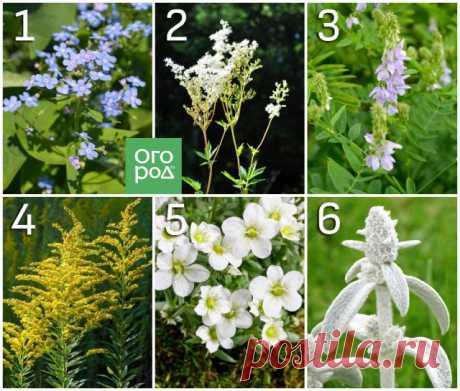 Какие цветы нельзя сажать рядом – 10 самых неудачных сочетаний | Цветники и клумбы (Огород.ru)