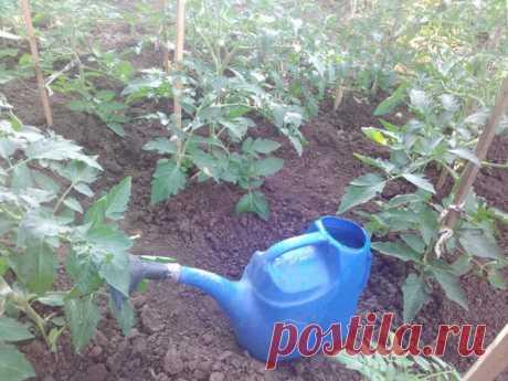 Какие растения и посадки можно поливать холодной водой, а какие нельзя | Летний досуг | Яндекс Дзен