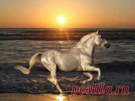 Изабелловая лошадь  Изабелловая или Кремовая лошадь - самая редкая и удивительная масть Ахалтекинской лошади. Место выведения - Туркменистан. Оазис Ахал-Теке. Используется в различных показах, скачках, конкурах и выездк…