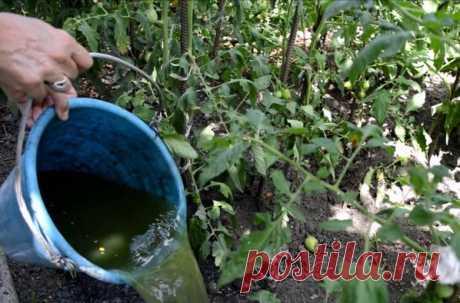 Особенности применения настоя из сорняков: дозировка удобрения, его преимущества – Все о томатах. Выращивание томатов. Сорта и рассада.
