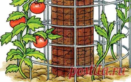 Интересный способ вырастить помидоры и иметь хороший компост